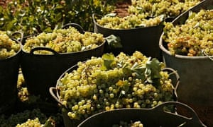 vineyard, Castilla La Mancha