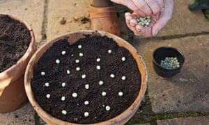 Alys Fowler: salad seeds