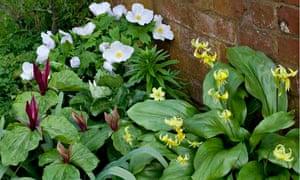 Gardens: layering bulbs