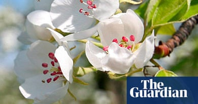 The 10 best poems about spring | Culture | The Guardian