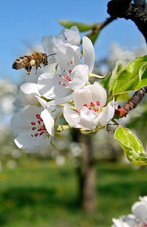 10 best: Pear trees in full bloom in Zalasarszeg