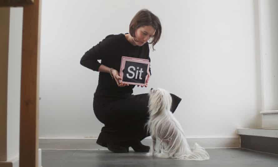 Dog reading an iPad