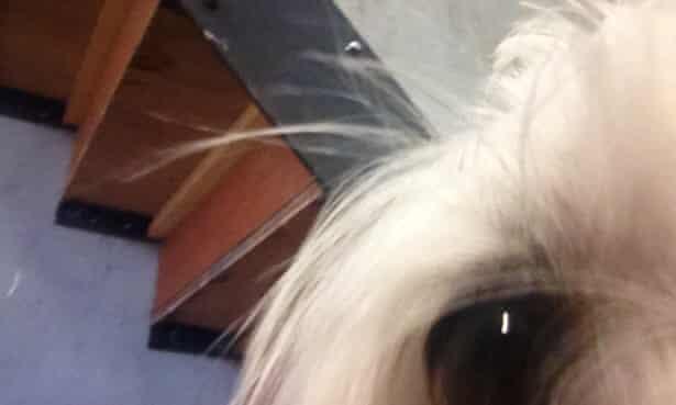 Olive the dog's selfie