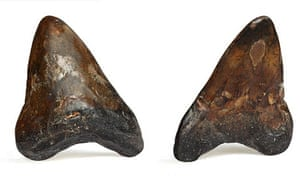 Prehistoric shark's tooth