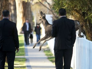 A deer jumps in front of Nevada Gov. Brian Sandoval