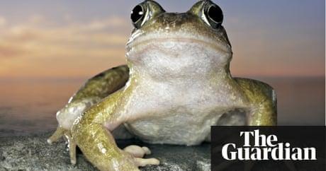 how-do-frogs-have-sex-nicki-minaj-penis