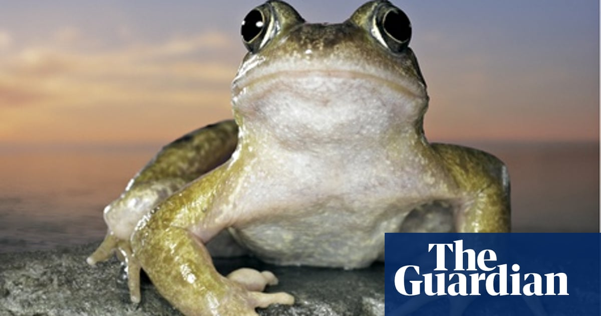 Specieswatch: Common frog | Environment | The Guardian