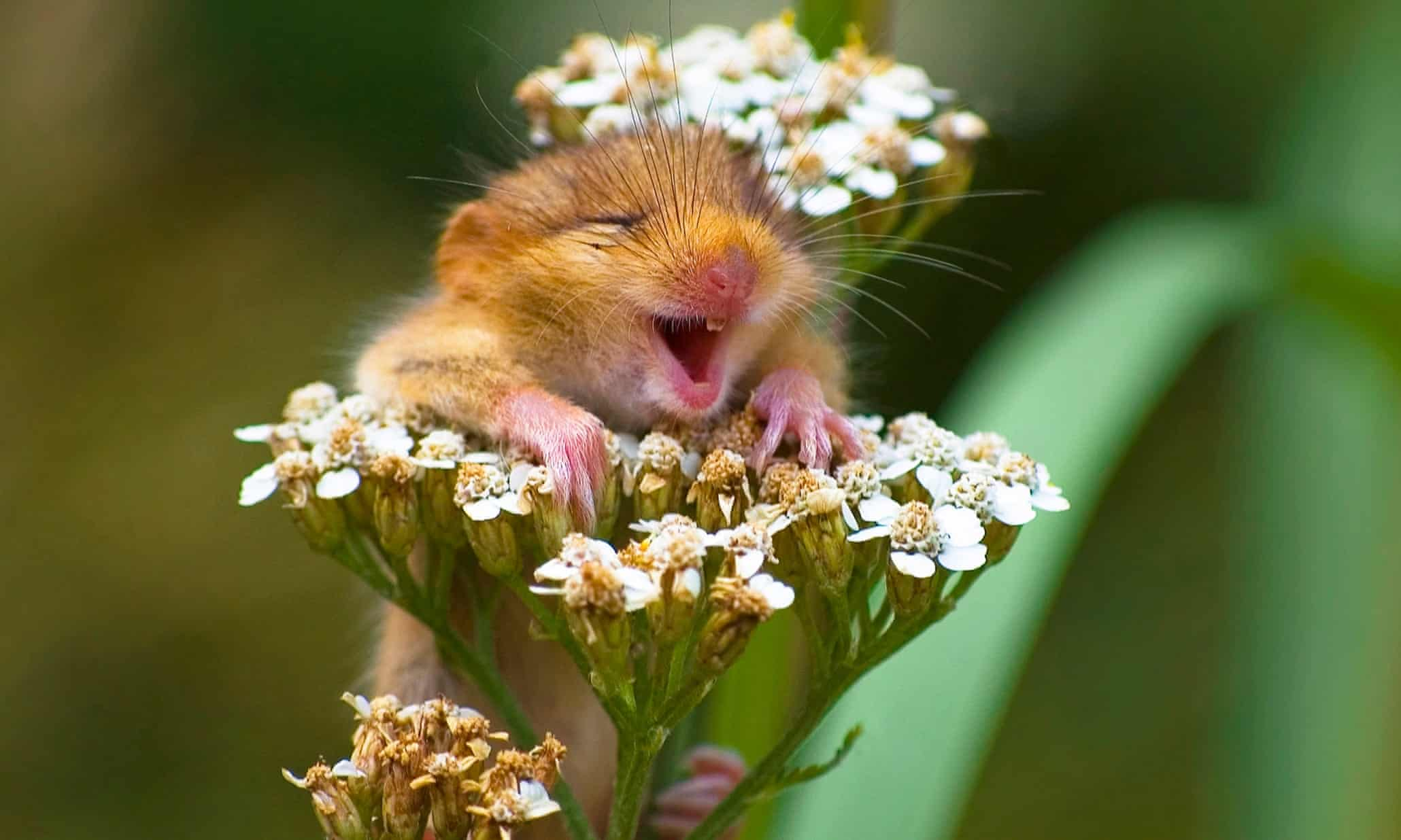 Hee haw: 'laughing animals' - in pictures