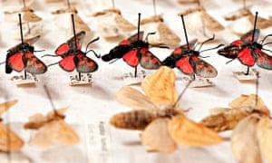 Moth specimens at the Leeds City Museum
