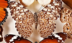 Butterflies from the Leeds City Museum