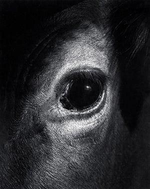 Jane Bown: Jane Bown Eye of a cow