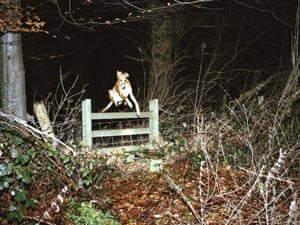 dog jumping 001 A Fine Beginning Wales photography collective