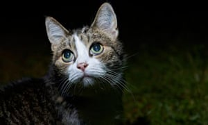 A cat on the prowl. Two people developed active TB after close contact with cats in 2013