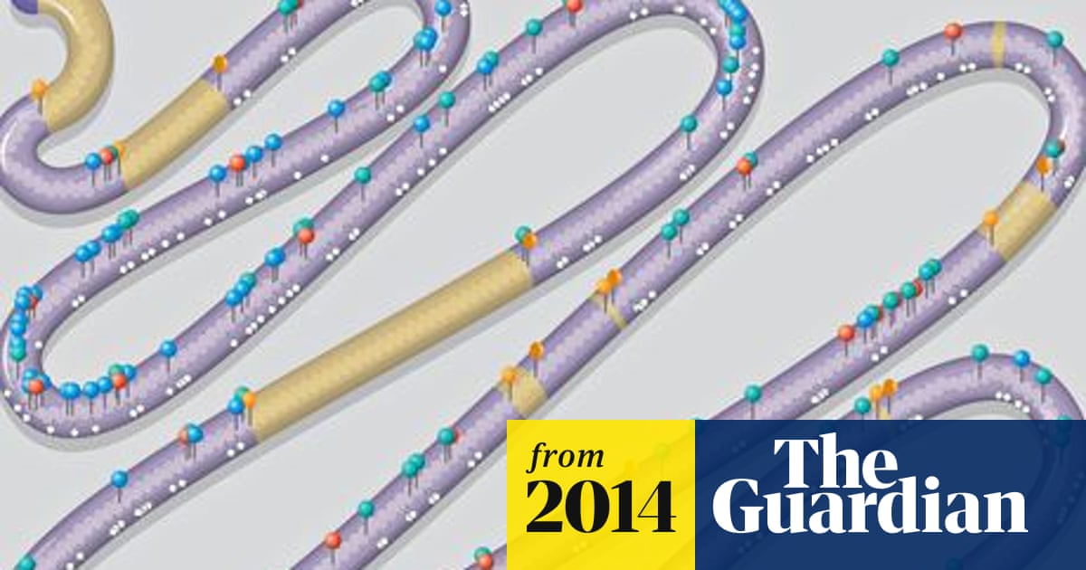 'Designer' chromosome for brewer's yeast built from scratch