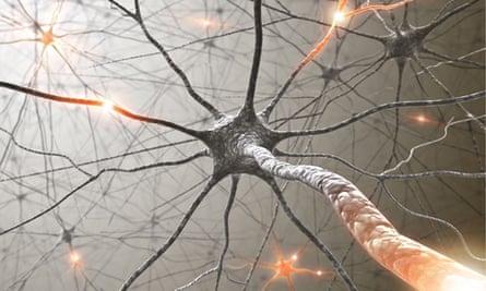 Brain: neurons