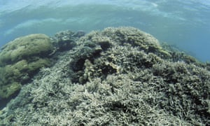 great barrier reef climate change coral