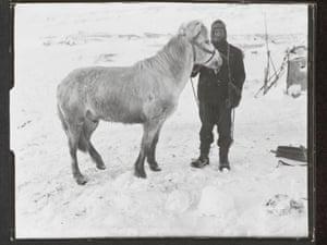 PO Edgar Evans with the pony Snatcher, Cape Evans, October 1911.