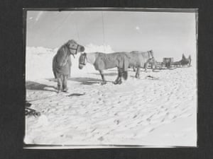 """Pony camp, Camp 15. Ponies (left to right) Snippetts, Nobby, Michael and Jimmy Pigg, Great Ice Barrier, 19 November 1911 (""""Ponies tethered on the ice beside a man-made ice wall. Sledges in background."""")."""