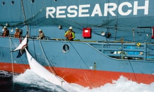 Whaling research vessel