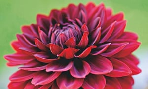 Gardens: how to grow your own cut flowers