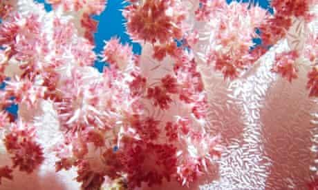 Pink soft coral closeup