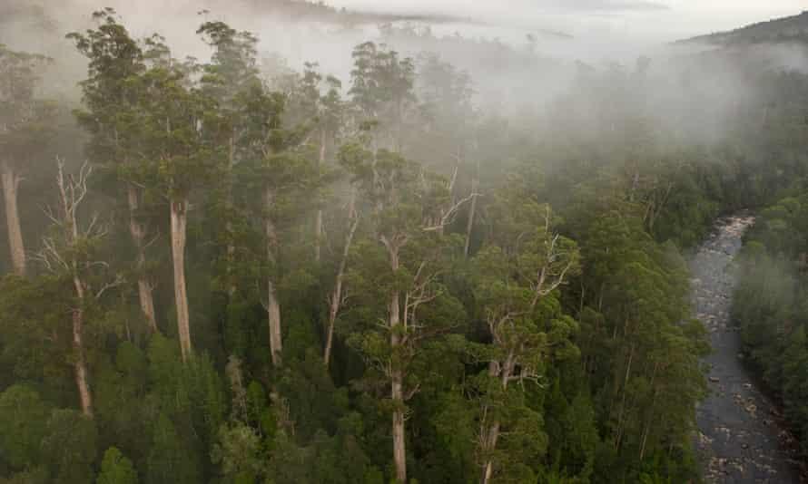 Weld Valley forests tasmania