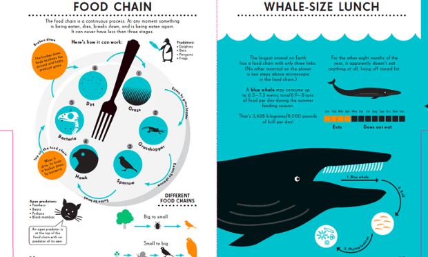 Food chain infographic. Illustration by Nicholas Blechman