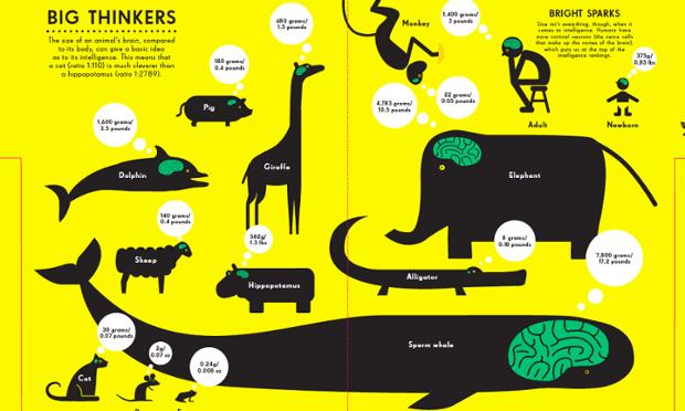Brain size infographic. Illustration by Nicholas Blechman