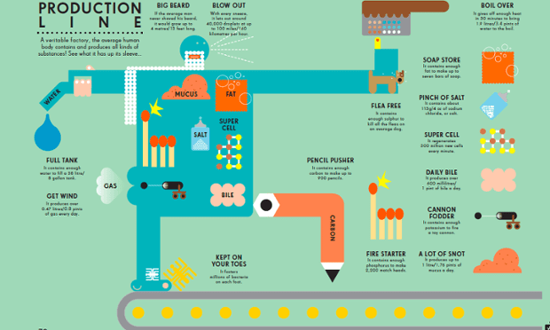 The body as a production line infographic. Illustration by Peter Grundy