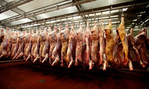 Cattle carcasses