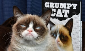 The Grumpy Cat book has spent 10 weeks on the New York Times bestsellers list.