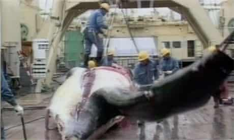 Japan Whaling Ruling
