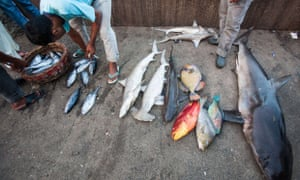 Indonesian fishermen unload various catch of fish in Aceh.