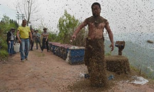 She Ping, a 34-year-old beekeeper, shakes off bees after an attempt to cover his body with bees.