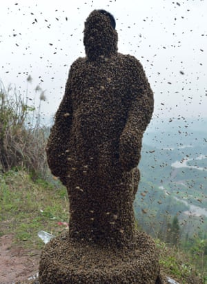 She Ping is totally covered with 45.65kg of bees.