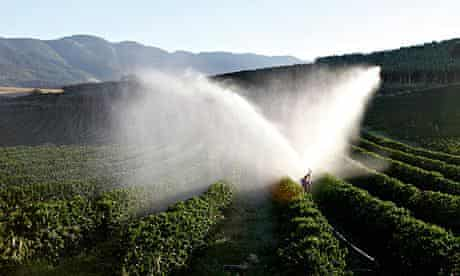 Coffee trees are irrigated in a farm in Brazil