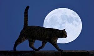 Full moon walking