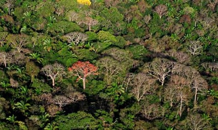 Aerial view of the Canal Zone, tropical forest canopy in Soberania National Park, Panama