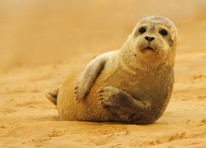2014 Mammal Photographer of the Year Competition Under 18 1st Prize Common Seal by Alex Berryman