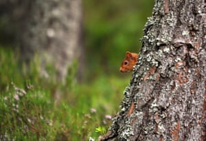 2014 Mammal Photographer of the Year Competition  2nd Prize Under 18 Red Squirrel by Samuel Baylis