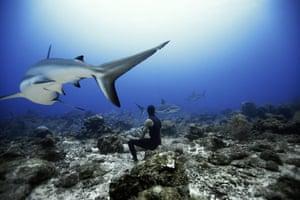 Sharks, Roatan: Free diving with sharks, Roatan