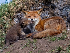 2014 Mammal Photographer of the Year Competition   Shortlist: Sealed With A Kiss by David Gibbon.