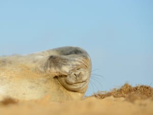 2014 Mammal Photographer of the Year Competition Shortlist: Seal by Ben Andrew