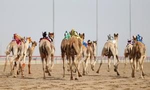 Camels race with robot jockeys during Al Marmoom Heritage Festival in Dubai, United Arab Emirates.