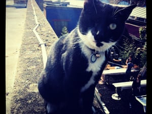 Pirate  - Bush Theatre cat
