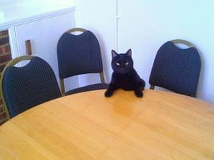 Marley - Bush Theatre cat