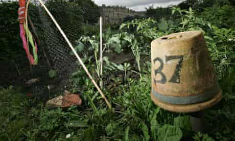 Allotment with flower pot