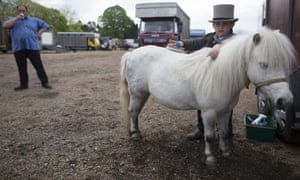Donny McDermott, aged 6, grooms his Shetland pony before taking part in the annual 'London Harness Horse Parade' on Easter Monday at The South of England Centre in Ardingly, England.