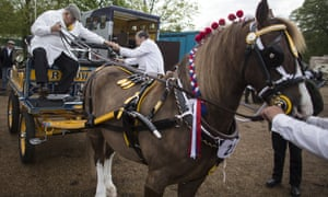 The parade of harnessed horses, ponies and donkeys are judged on numerous criteria in the hope of receiving a coveted First Class award.