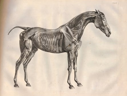 The Anatomy of the Horse print (1766) by George Stubbs